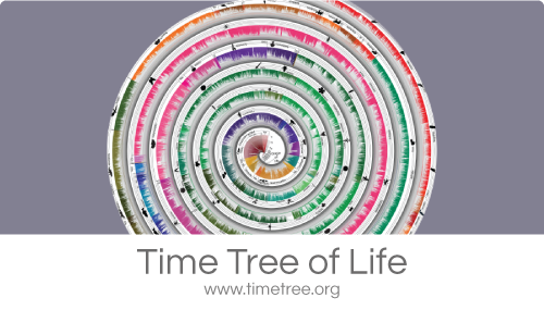Timetree of Life slide